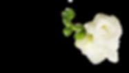 AdobeStock_171335123_3.png