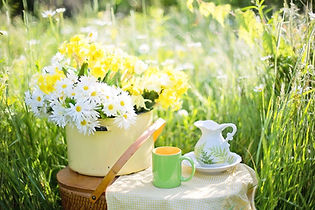 daisies-1466860_1280.jpg