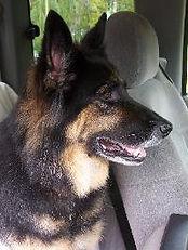 Canandaigua NY Pet Memorials - dog