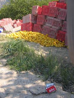 Cajas de limones