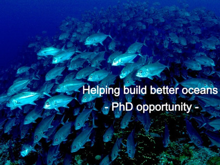Want to help build healthier oceans? This PhD opportunity may be for you
