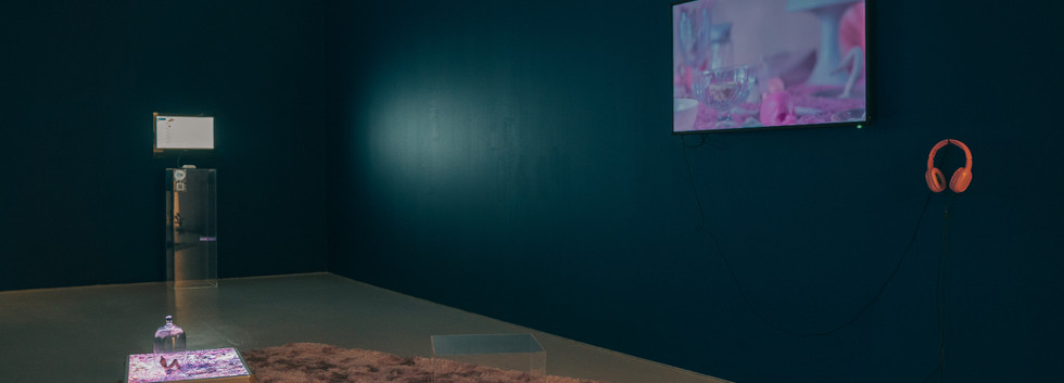 Installation View (Wide)
