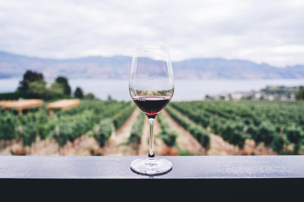 Preparazione e Degustazione di Vini Campani