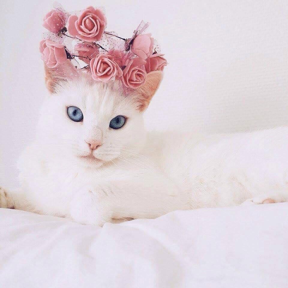 hvit katt med blomster