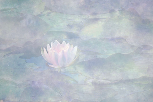 The Waterlily Medium Mounted Print