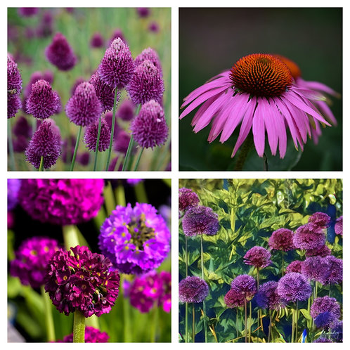 The Purple Tones Collection - Greeting Cards