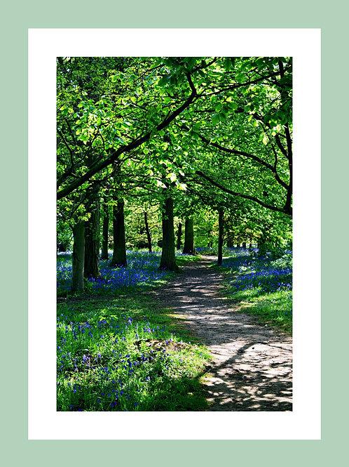 Bluebell Woods Personalised eCard