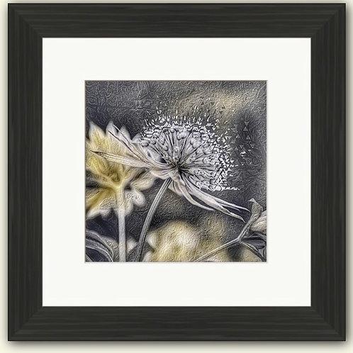 Astrantia Photoart Framed Print