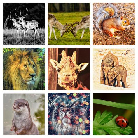 Other Animals.jpg