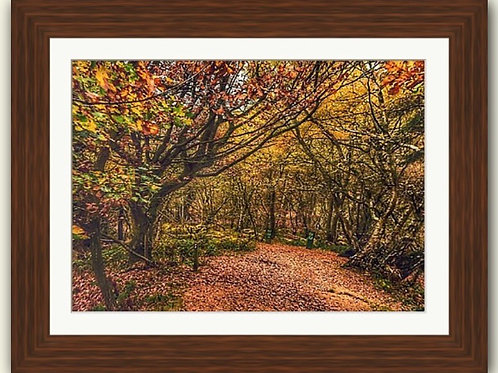 Haughmond Hill - Framed Print