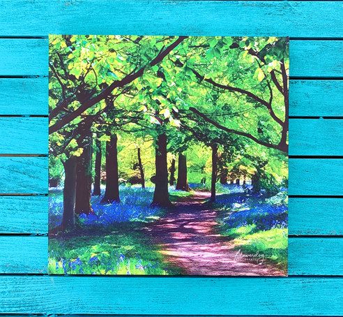 Bluebell Woods (30 by 30)