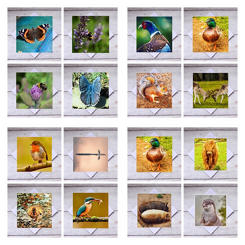 Animals Mixed Bumper Pack - Greeting Cards