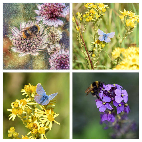 The Butterflies & Bees Collection - Greeting Cards