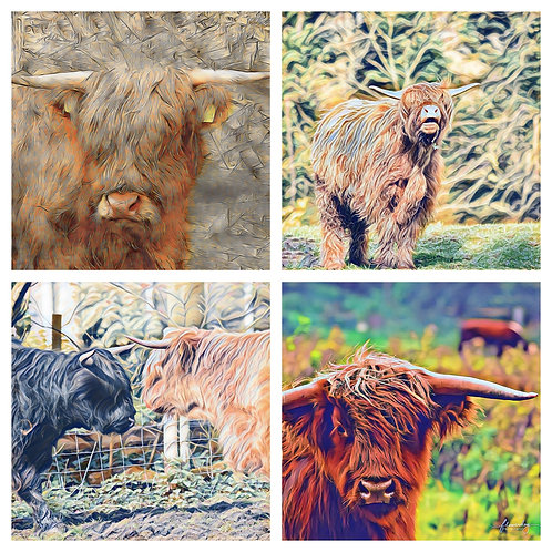 The Coos Photoart Collection - Greeting Cards