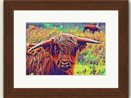Windswept Coo Photoart Framed Print