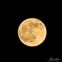 Wolf Moon Jan 20