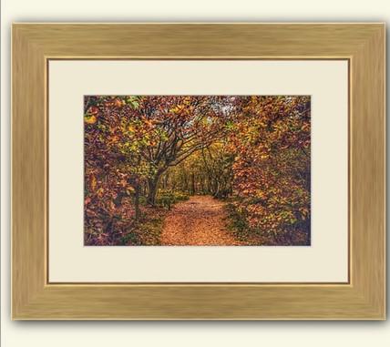 Autumn Walk at Haughmond Hill