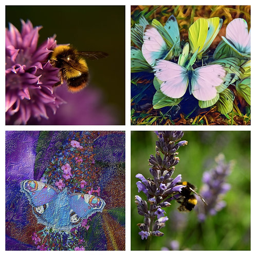 The Bees & Butterflies Collection - Greeting Cards