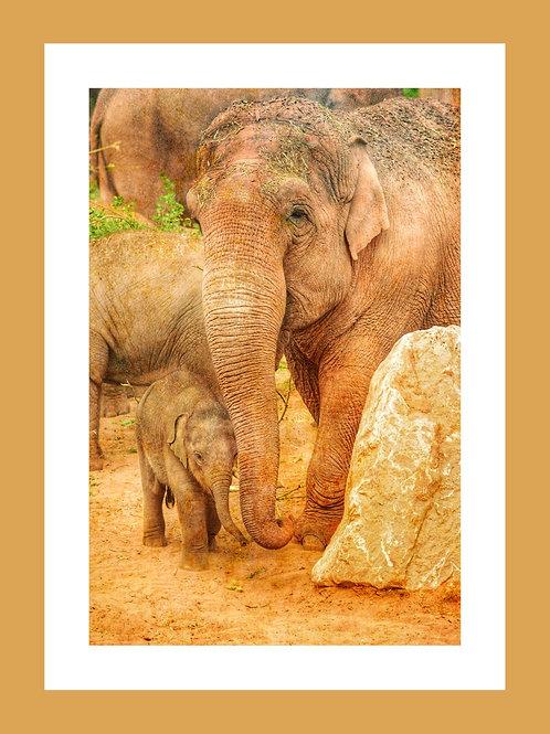 Mother & Baby Elephant Personalised eCard
