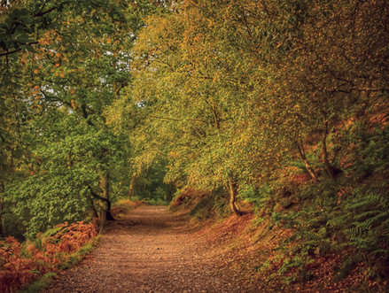 Autumn Trees at the Wrekin