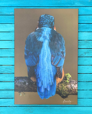 Feathers (60 by 40)