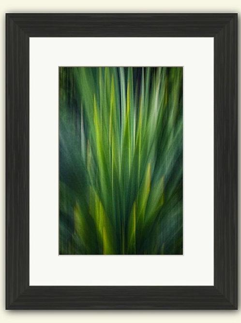 Impressions of a Yucca - Framed Print