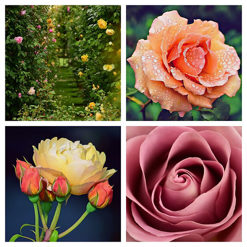 The Roses Collection - Greeting Cards