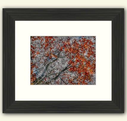 Autumn Trees Compsite