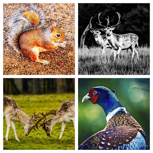 The Autumn Animals Collection - Greeting Cards