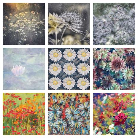 photoart flowers