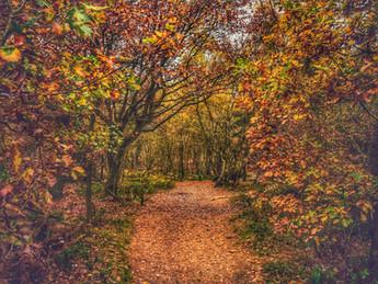 Autumn Walk at Haughmond