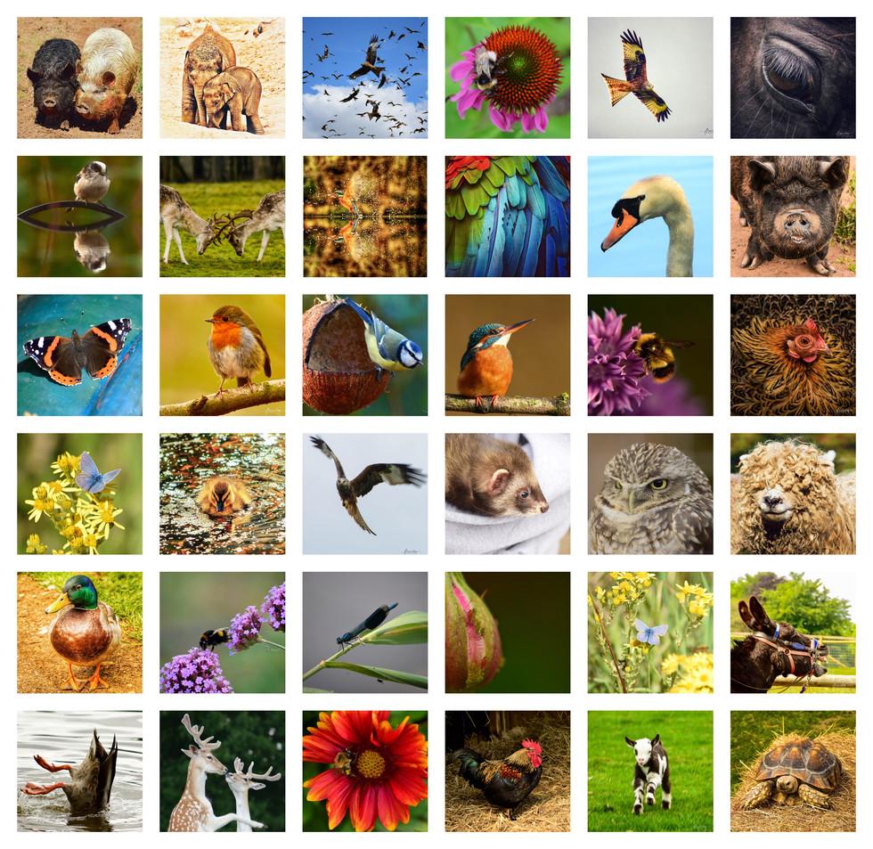 animal collage.jpg