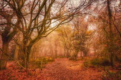 Misty Haughmond Hill