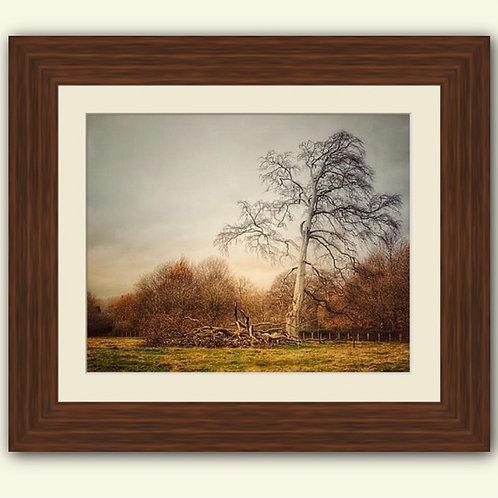 Beautiful Birch Framed Print