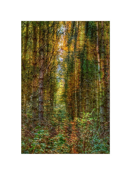 Forest Photoart Personalised eCard