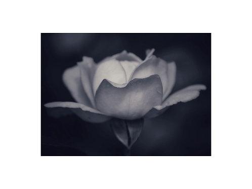 Mono Rose Personalised eCard