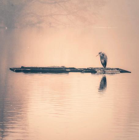Dreamy Heron