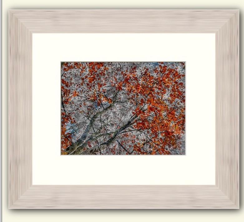 Autumn Trees Composite