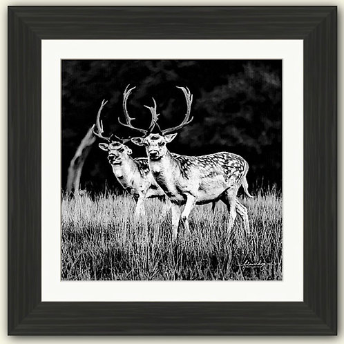 The Boys are Back in Town Framed Print (B/W)