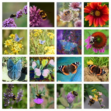 Bees and Butterflies.jpg