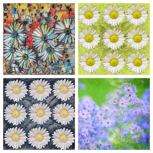 The Daisy Collection - Greeting Cards