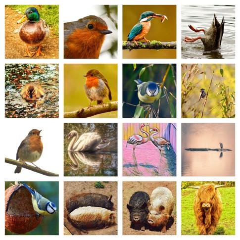 Birds and Farm.jpg