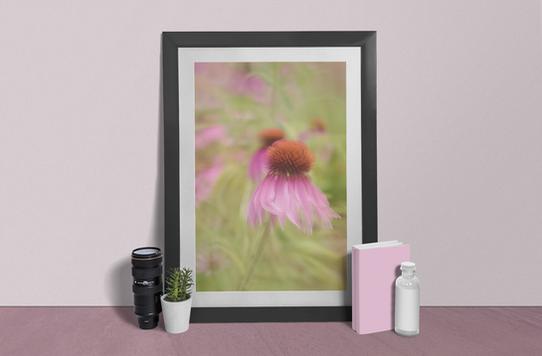 Dancing Echinacea