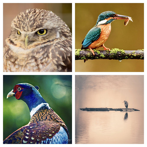 The Mixed Birds Collection - Greeting Cards