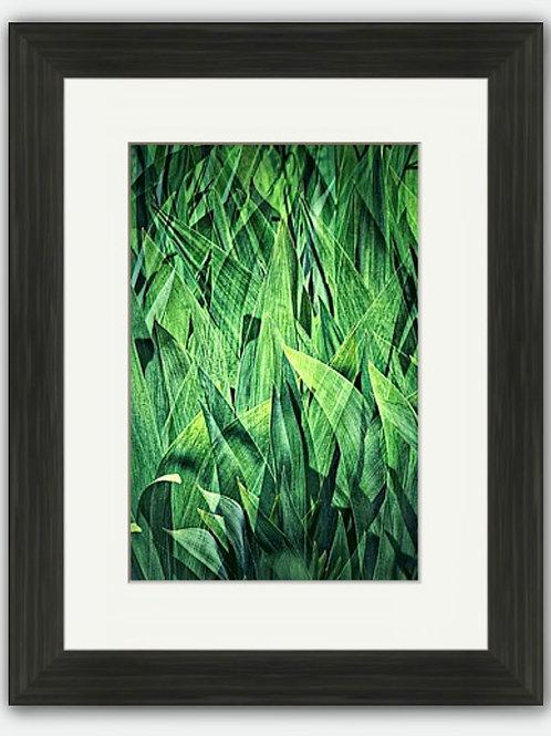 Hosta Composite Framed Print