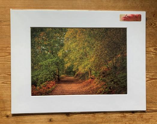 Autumn at The Wrekin