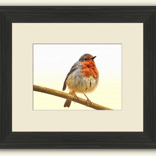 Robin Redbreast Framed Print