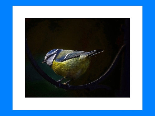 Blue Tit Photoart Personalised eCard