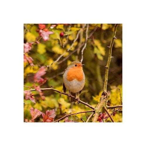 Robin 1 Personalised eCard