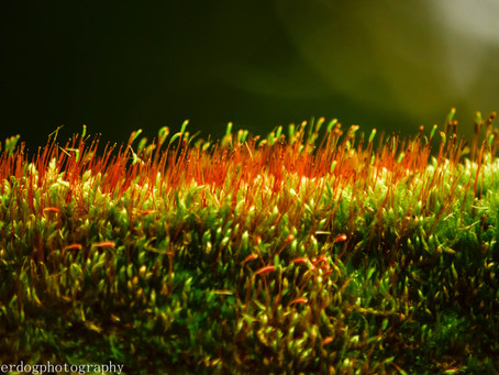 Up close and personal with MOSS